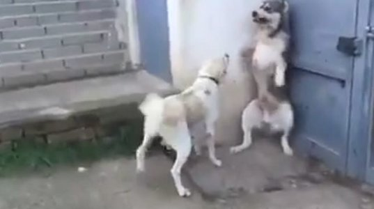 """ზესახალისო ვიდეო, """"ნუ უყვირი ბავშვებს"""""""