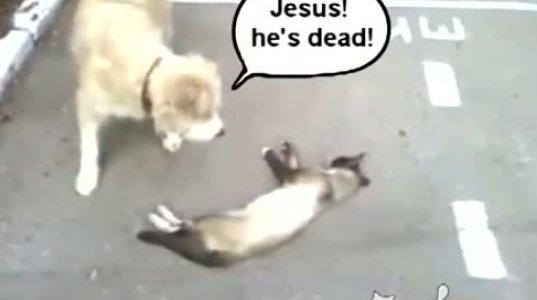 """""""გადაყირავდებით"""" კატამ ძაღლის დანახვაზე თავი მოიმკვდარუნა"""