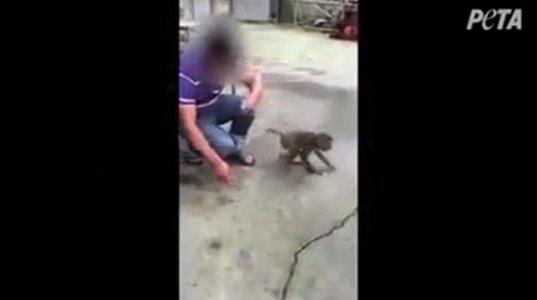 ცხოველების საშინელი დამცირება!!!
