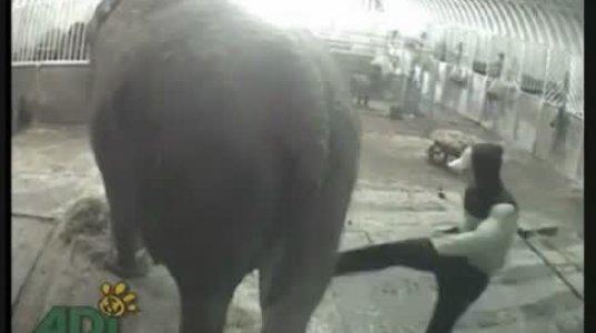 რა საცოდაობა და საშინელება ხდება ცირკის ცხოველების ცხოვრებაში...