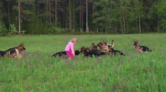 5 წლის გოგონა 14 გერმანული ნაგაზის გარემოცვაში თამაშობს