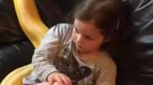 4 წლის გოგონა ანიმაციური ფილმს უყურებს გველთან ერთად