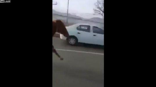 სად ეჩქარება ამ ცხენს?