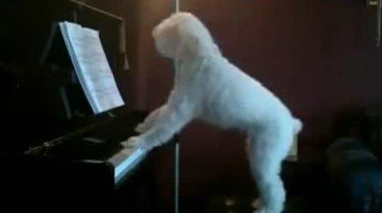 """""""ჭეშმარიტი მუსიკოსი"""",ბევრ ქართველ მომღერალს შეშურდება მისი"""