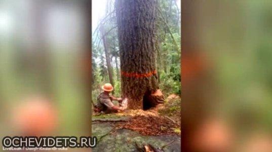 """ასეთი ხის მჭრელი ღმერთმა გაშოროთ ანუ ხის მჭრელმა """"მოძუძგა"""""""