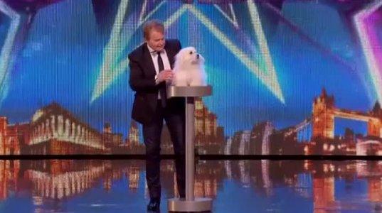 """ძაღლი რომელიც 5 ენაზე ლაპარაკობს, ბრიტანული """"ნიჭიერის"""" კონკურსში"""