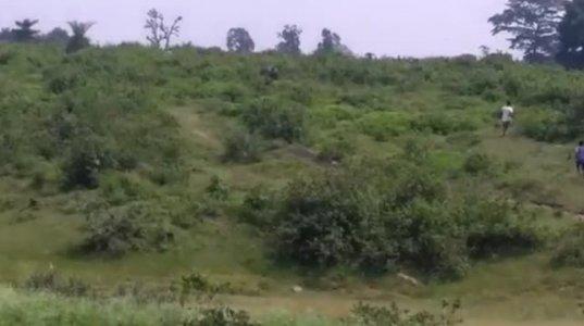 სელფის მსხვერპლი-ინდოეთში სპილომ მამაკაცი მოკლა