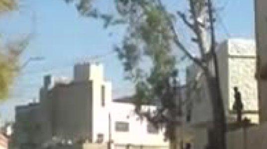 ხის მოჭრას დენის ბოძიც შეეწირა