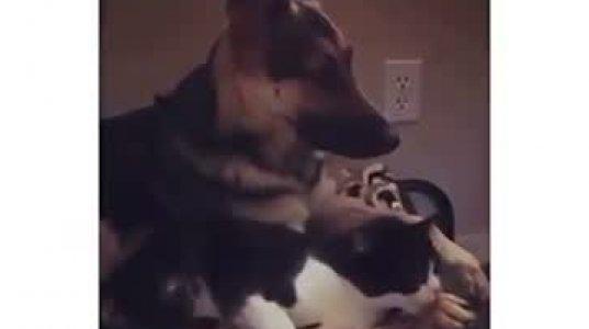 ვინ თქვა ძაღლი და კატა ვერ იტანენ ერთმანეთსო