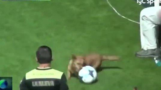 არგენტინაში ძაღლმა თამაშის დრო ფეხბურთელებს ბურთი წაართვა