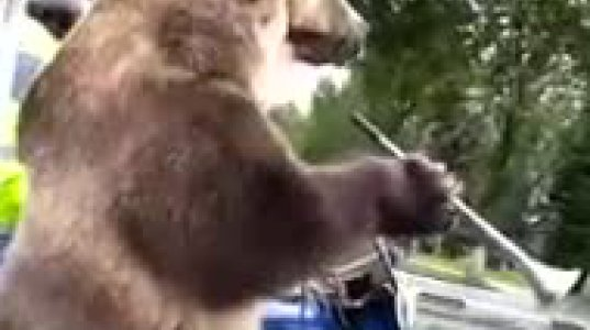 მხოლოდ რუსეთში თუ ნახავთ ასეთ რამეს,დათვი მოტოციკლზე ზის და ასიგნალებს