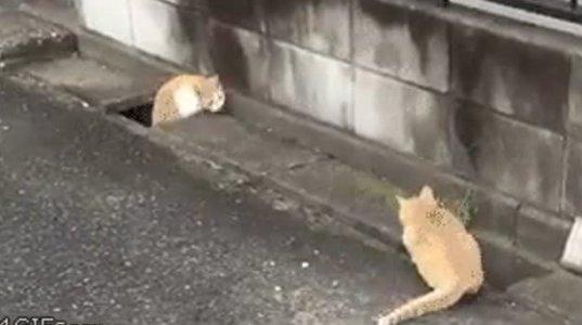 საოცარი არსებაა კატა, რასაც ეს ვიდეოც ადასტურებს