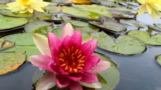 ყვავილების მუსიკა - საქსაფონი