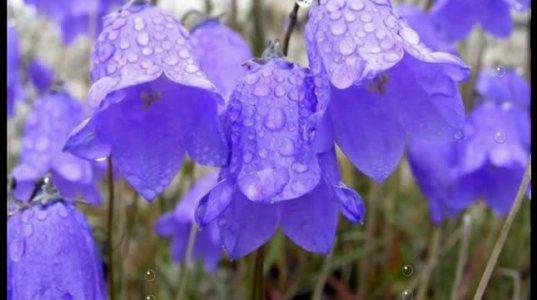 წვიმის მუსიკა...