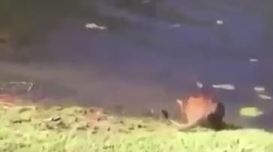 კატა ადამიანის დაცემინებამ შეაშინა და წყალში ჩავარდა