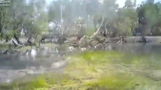 ავსტრალიაში მონადირეებს ნიანგმა შეუტია