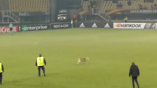 ევროპა ლიგის თამაშზე მოედანზე ძაღლი შევარდა