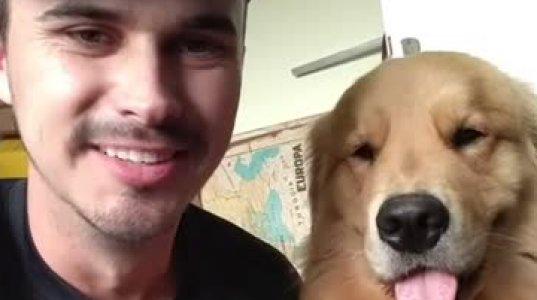 პოზიტიური ვიდეო-ძაღლი,რომელიც პატრონის მიმიკებს იდეალურად იმეორებს