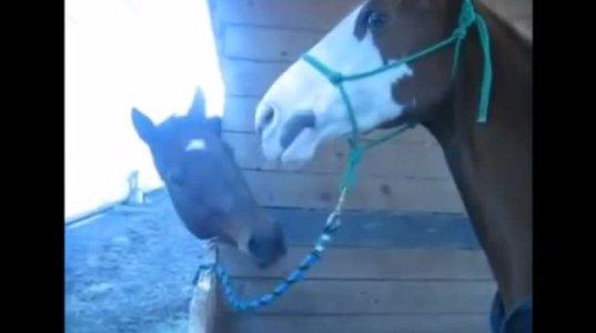 10 სასაცილო ცხენი