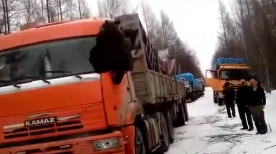 """მოძრაობა პარალიზებულია - დათვმა """"კამაზის"""" """"ოკუპირება"""" მოახდინა"""