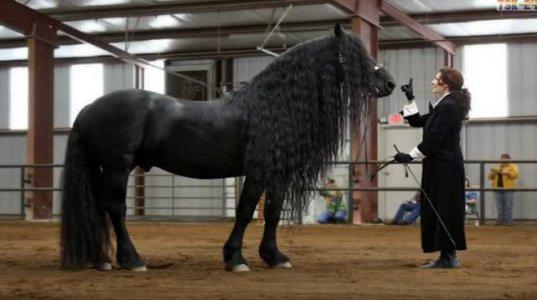 ყველაზე დაუჯერებლად მაღალი ცხენები მსოფლიოში