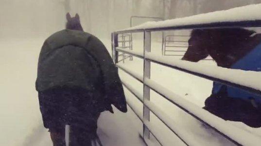 """ინტერნეტი """"შეყვარებულია"""" ცხენებზე, რომლებსაც თოვლის ეშინიათ"""