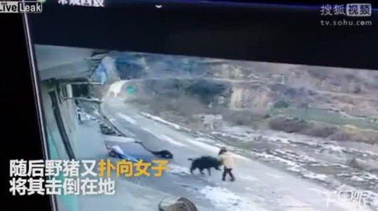 ჩინეთში გარეული ტახი ხალხს დაესხა, ერთი მოკლა, მეორეს მძიმე დაზიანებები მიაყენა