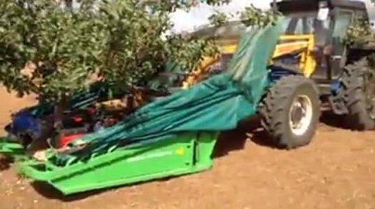 როგორ იკრიფება ერთ წუთში მთლიანი ვაშლის ხე