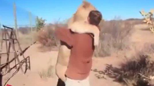 ყველაზე მოსიყვარულე ლომი მსოფლიოში