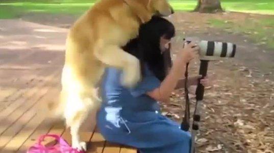 აღგზნებული ძაღლი და ქალი