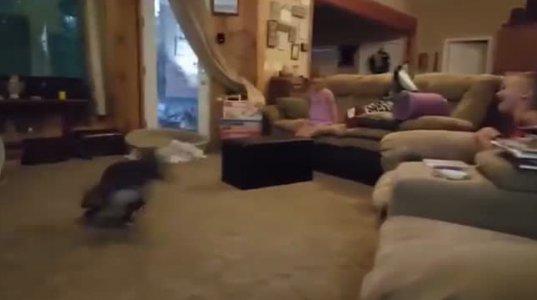 მხიარული ძაღლი