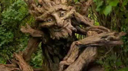 უიშვიათესი და ულამაზესი ხეები