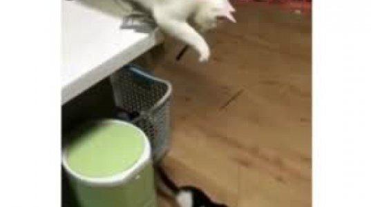 ბავშვობაში ზუსტად ასე ვათამაშებდი კნუტს, როგორც ეს კატა ათამაშებს თავის კნუტს