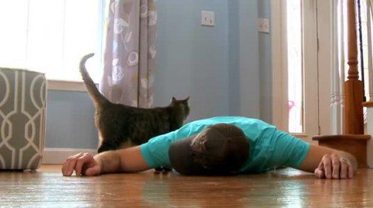 ექსპერიმენტი, როგორ რეაგირებს კატა პატრონის სიკვდილის დროს