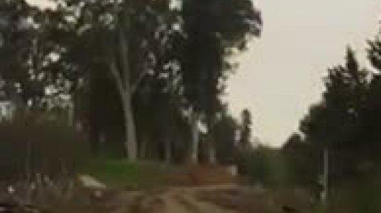 ხათუნა ხოფერია-ბიძინას ხეები თავის აგარაკზე გადააქვსო, წავედი და ვნახე!