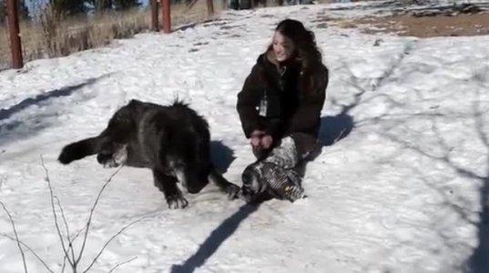 მგლების და გოგოს მეგობრობა