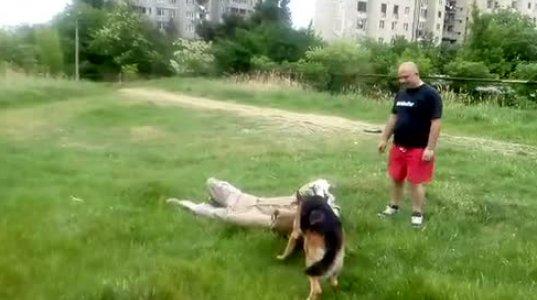 გაწრთვნილი ძაღლი პატრონის სრული კომფორტია