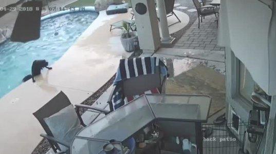 საოცარი შემთხვევა-ძაღლი  წყალში ჩახტა და მეგობარი გადაარჩინა(არიზონა,აშშ)