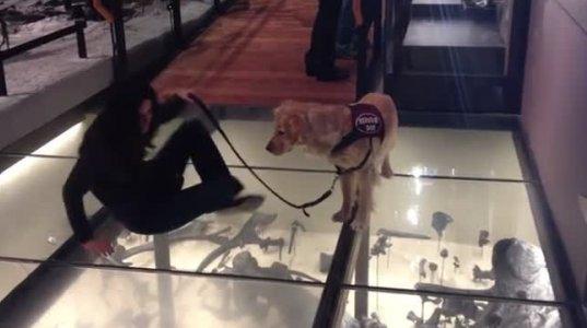 ძაღლს ეშინია გადასვლა