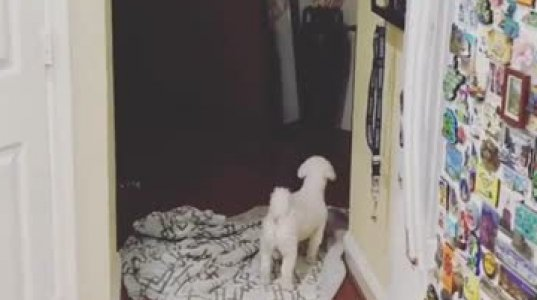 საყვარელი ძაღლი