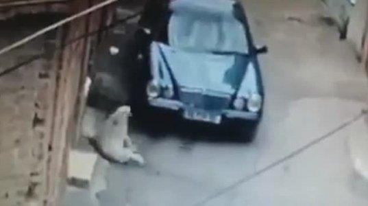 შემზარავი ვიდეოკადრები - თბილისში, მძღოლმა მწოლიარე ძაღლს მანქანით გადაუარა