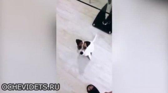 ძაღლი, რომელიც სახლში ელექტროენეგიის გამორთვით ეკონომიას აკეთებს