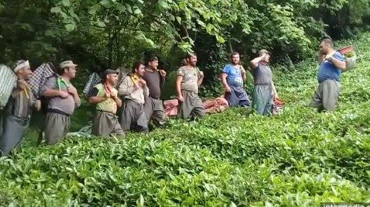 """""""ოცეულო სწორდი! ცეცხლი!"""" - ქართველები თურქეთში ჩაის კრეფაზე ხუმრობენ (ვიდეო)"""