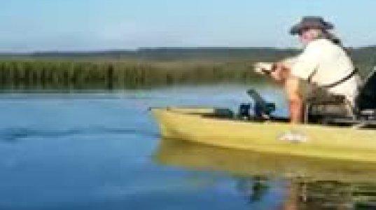 ზვიგენი 10 წუთი დაასეირნებდა მეთევზის ნავს(აშშ)