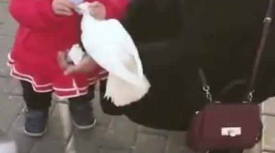 პატარა ბავშვი მტრედს ართმევს ლუკმას