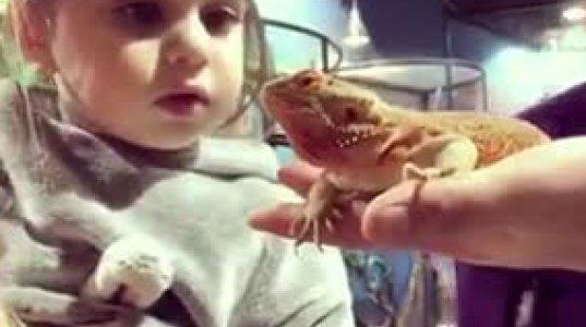 """""""გუი გამისკდა გუი"""" პატარა, უსაყვარლესი ბავშვის რეაქცია ხვლიკის დანახვაზე"""