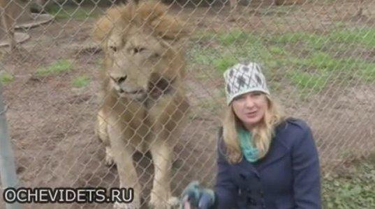 """ცხოველთა """"მეფესთან"""" გახუმრებამ ამერიკელ ჟურნალისტ გოგოს ლამის ჩაასველებინა შიშით"""