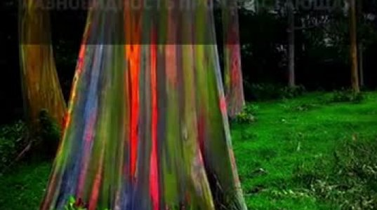 მსოფლიოში ყველაზე ძველი და უნიკალური ხეების კოლაჟი