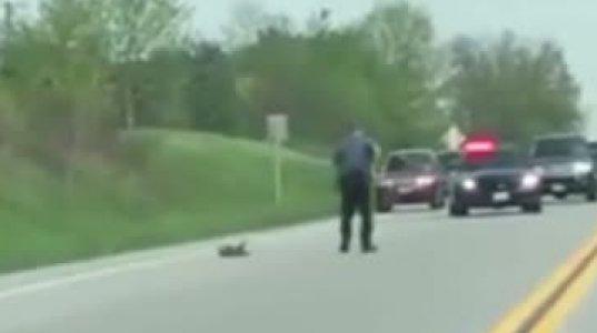 """პოლიციელმა გზაზე """"როსომახის"""" გადასასვლელად გზა გადაკეტა თუმცა იძულებული გახდა ელექტროშოკი გამოეყენებინა"""