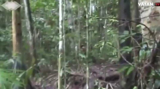 ბრაზილიის ამაზონის ტყეებში ახალი არაცივილებული ტომი აღმოაჩინეს